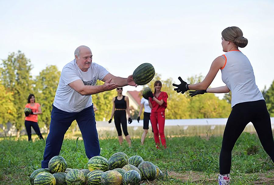 Александр Лукашенко собирает арбузы