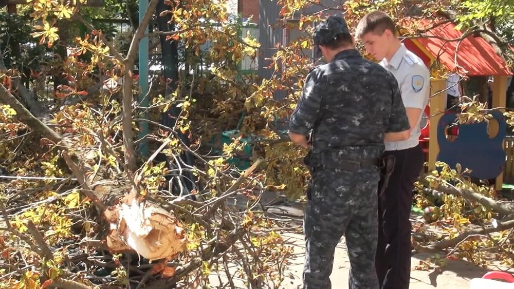 Место падения дерева в детском саду