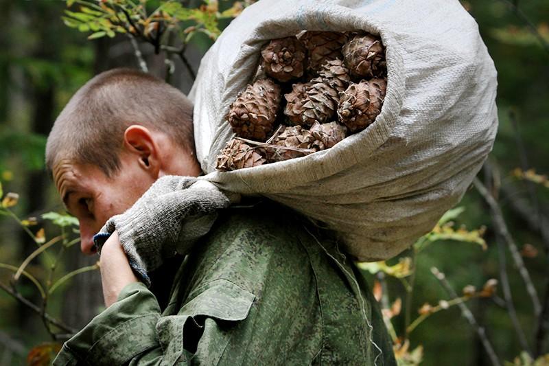 Мужчина несет мешок с кедровыми шишками