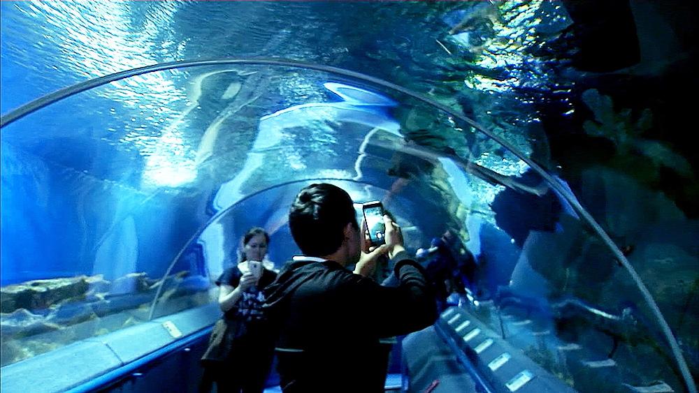 Океанариум в Санкт Петербурге