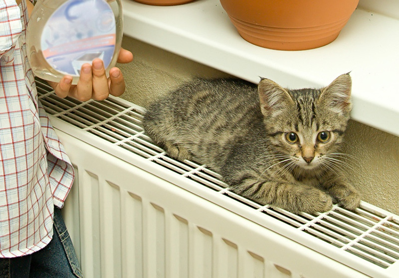 Кошка греется на радиаторе