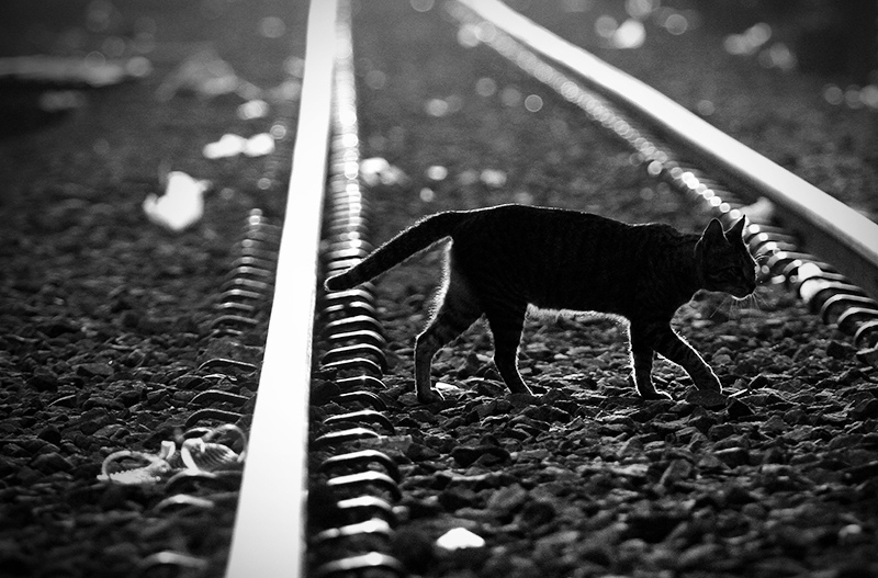 Кот на рельсах