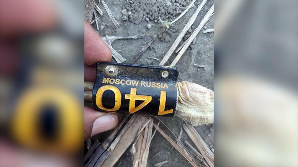 Убитые чёрные аисты из России