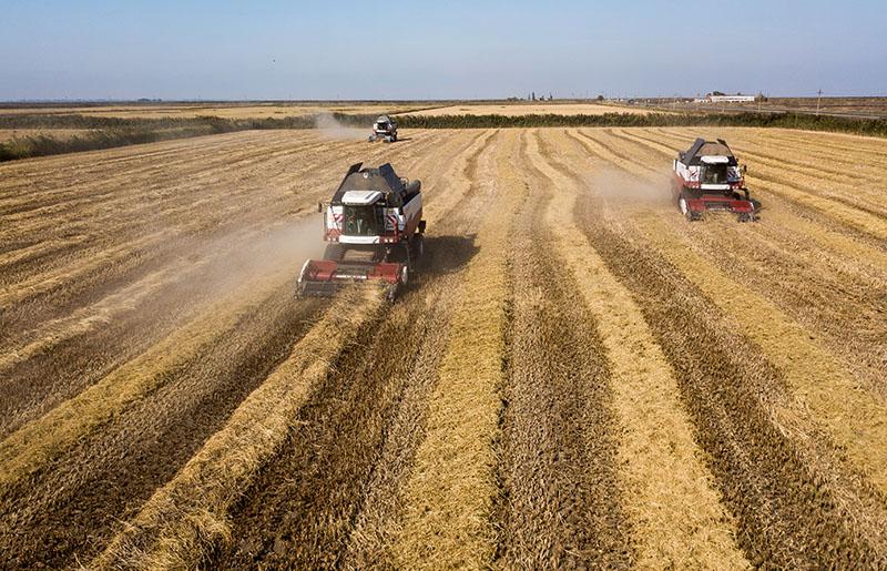 Сбор урожая в Краснодарском крае