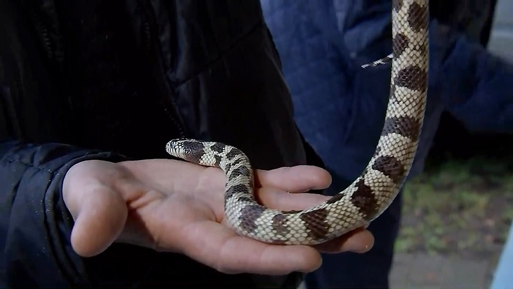 Продажа змей