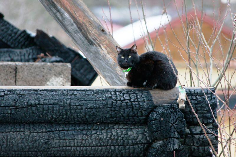 Кошка на пепелище