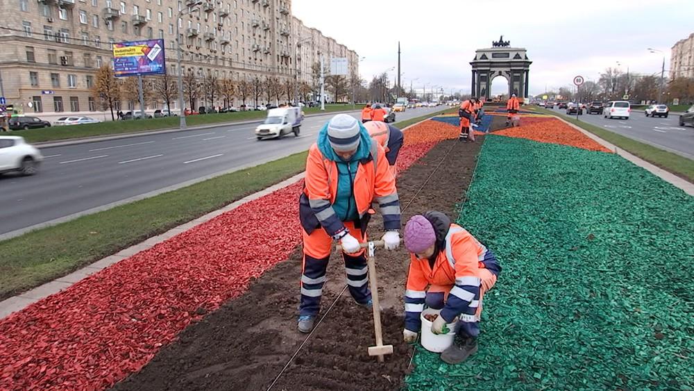 Высадка тюльпанов на Кутузовском проспекте