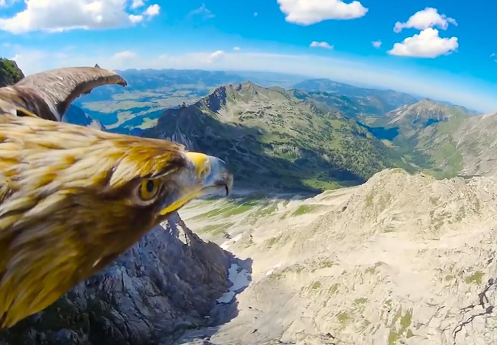 Орел в полёте