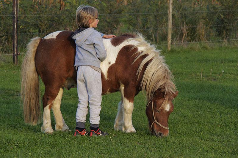 Маленький принц: казанский школьник на пони умилил народ