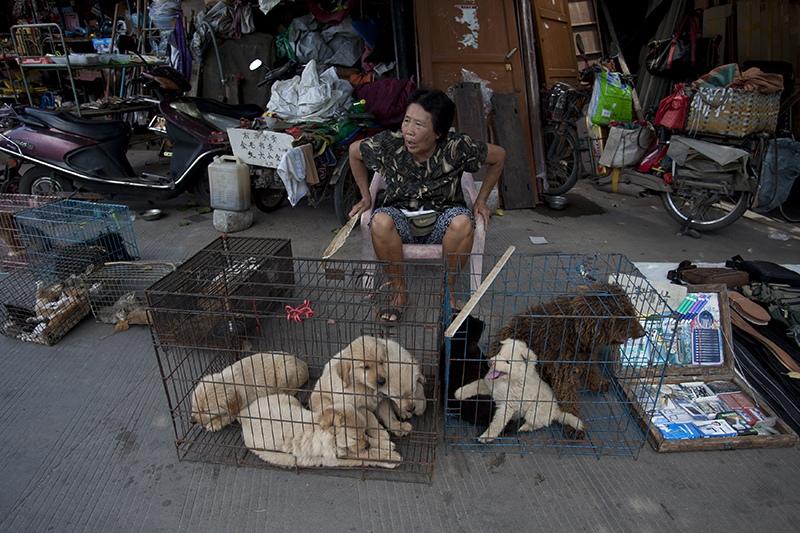 Продажа собак в Китае