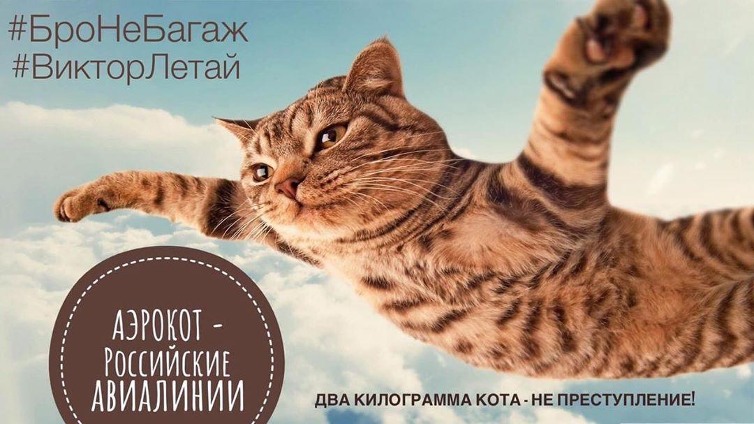 Кот Виктор