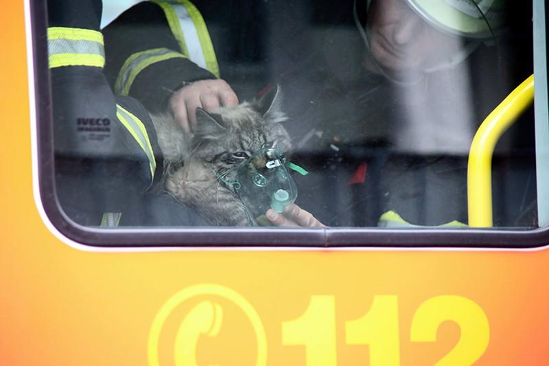 Пожарный спасает кота