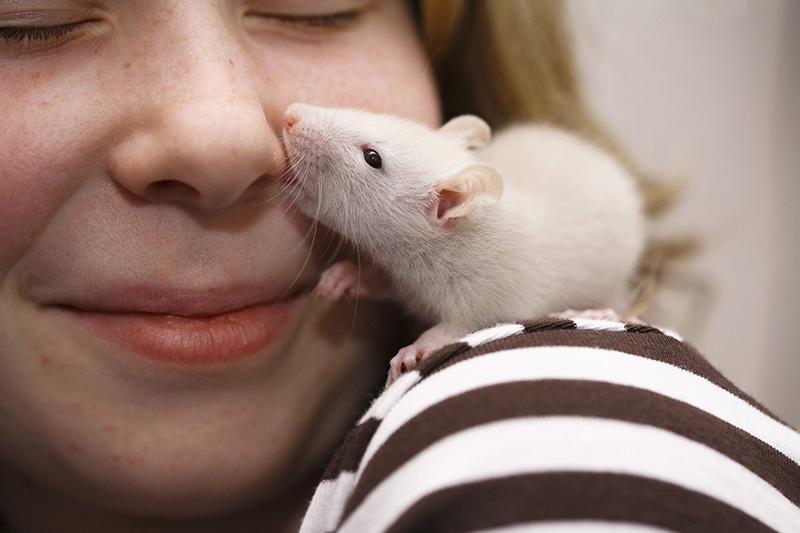 Девочка общается с крысой