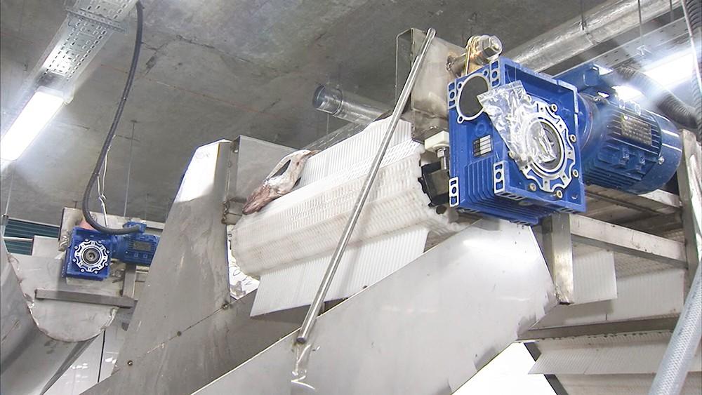 Завод по переработке белой рыбы