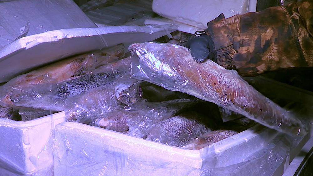 Контрабанда рыбы