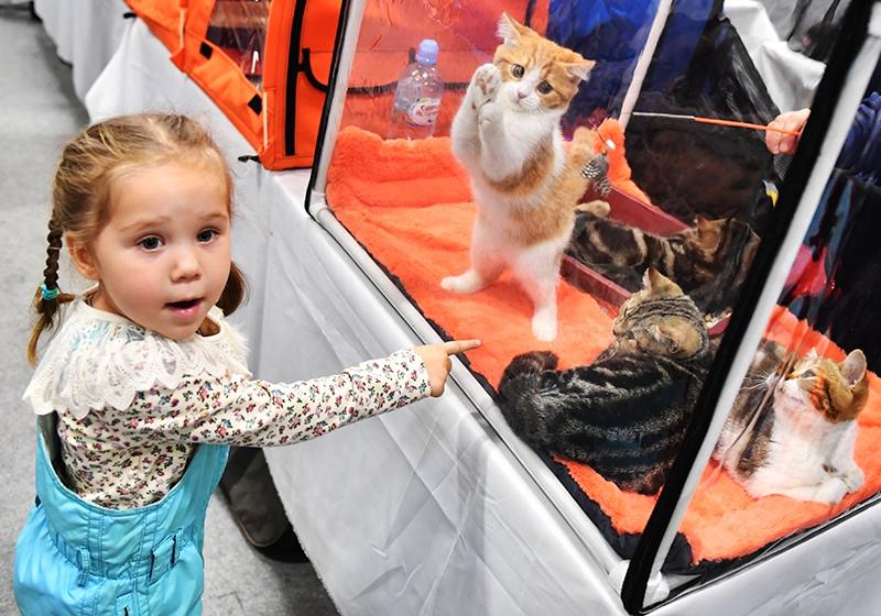 Девочка у переноски с кошками