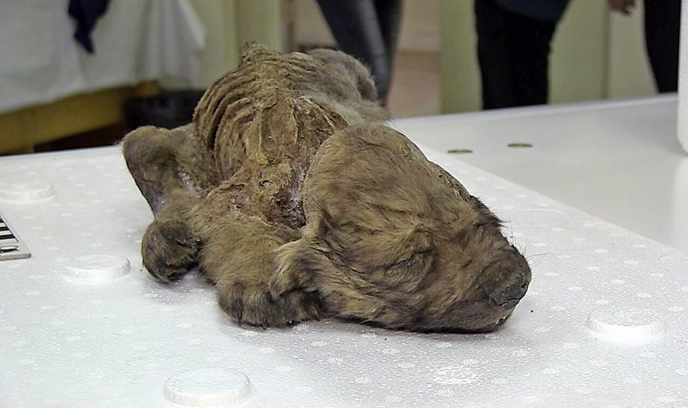 Мумия щенка