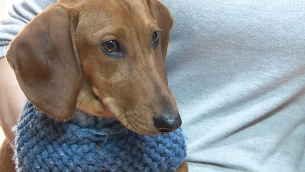 Собака в свитере