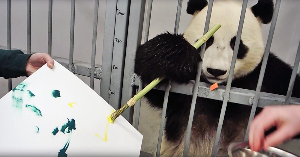 Панда рисует