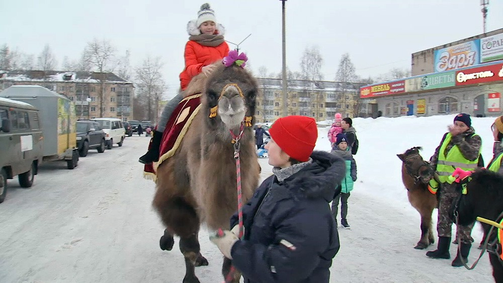Детей катают на верблюде