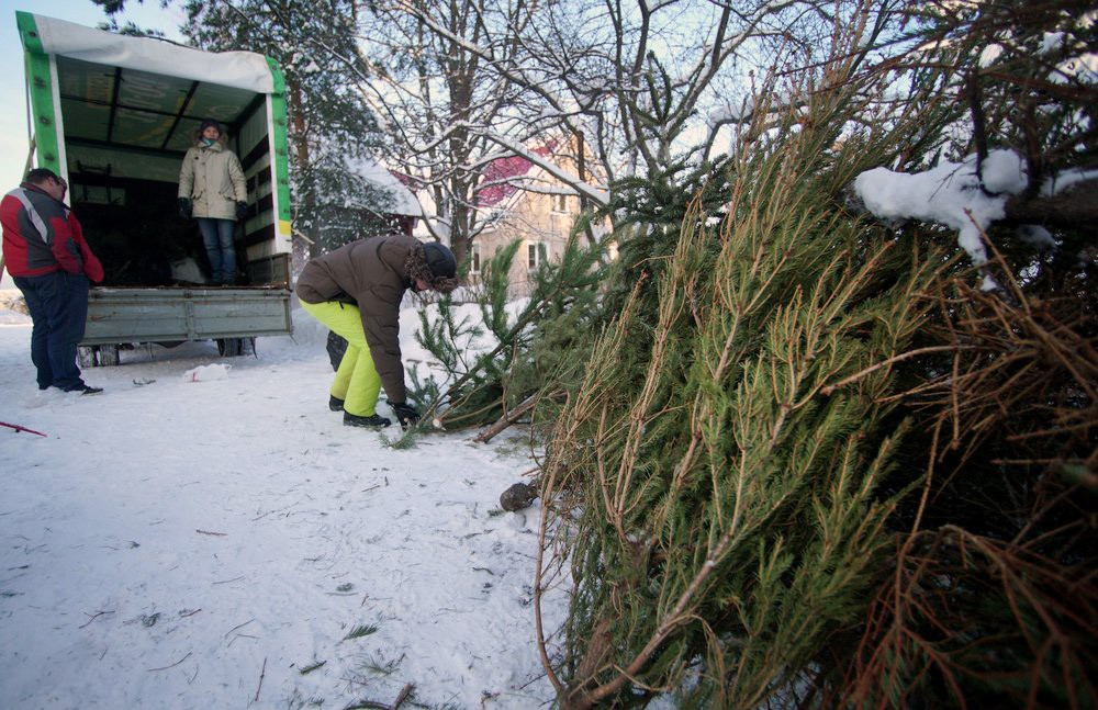 Утилизация новогодних ёлок