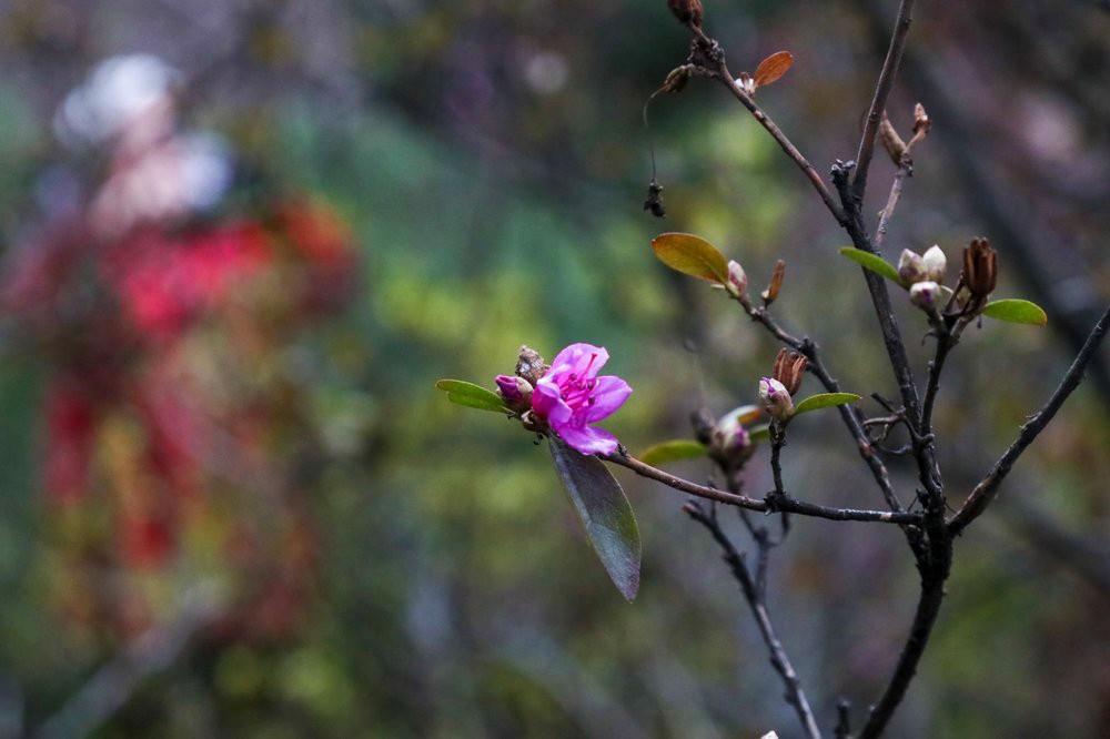 Распустившиеся весенние цветы в ботаническом саду
