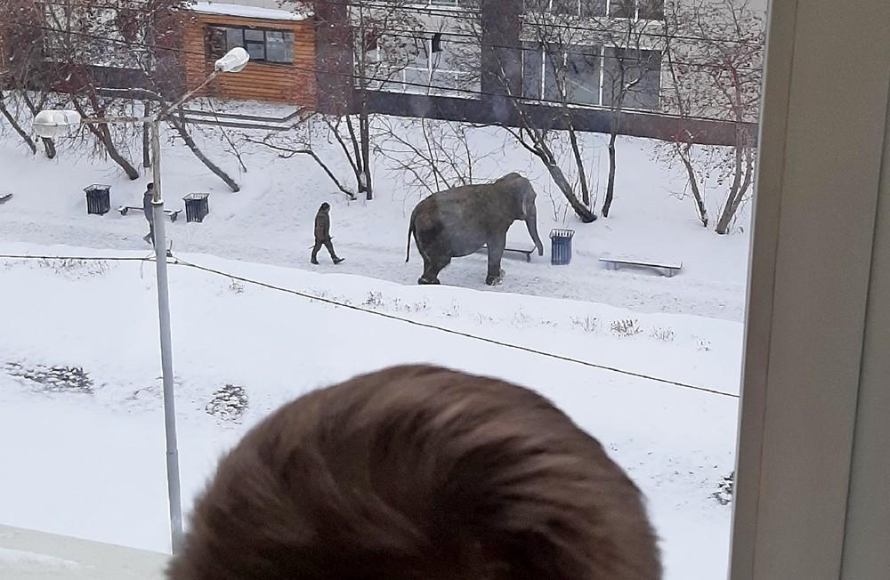 Сбежавший слон