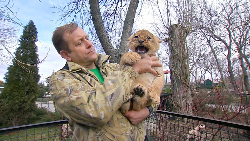 Олег Зубков с львенком