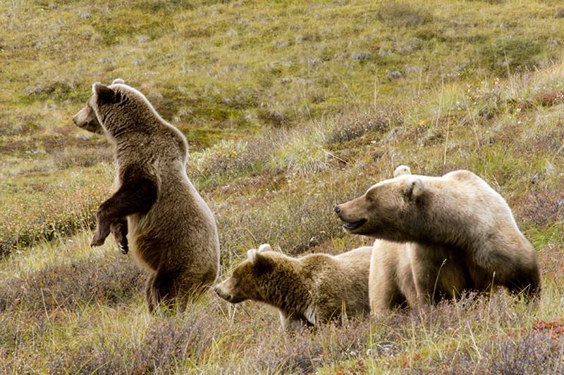 Медведь в заповеднике