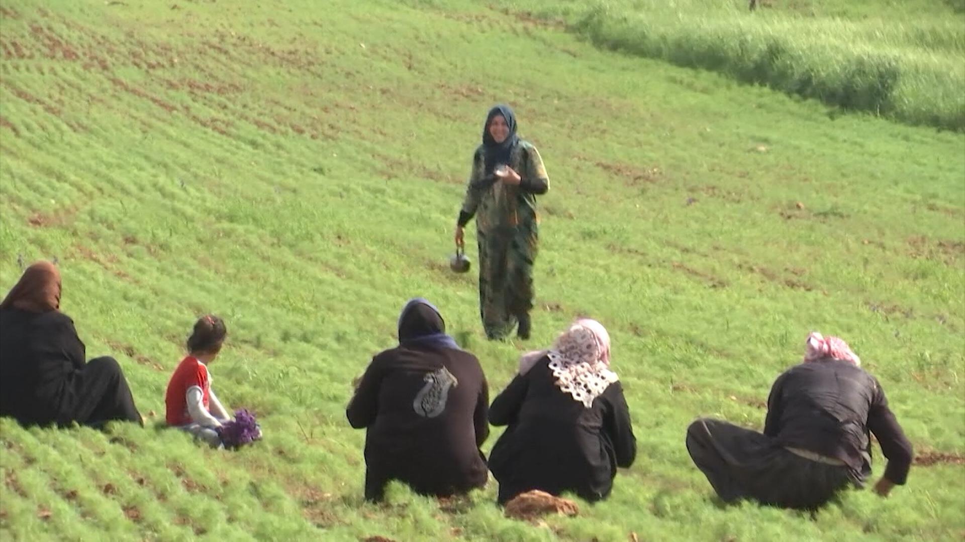 Жители Сирии возвращаются к мирной жизни