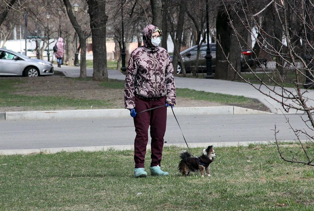Женщина в медицинской маске гуляет с собакой