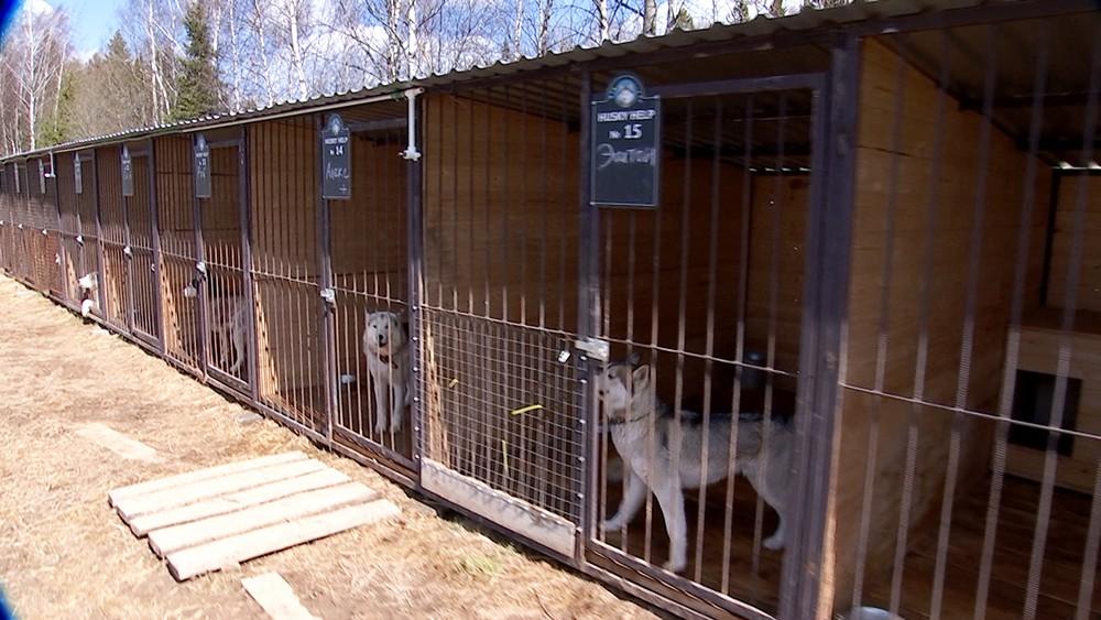 Приют для собак