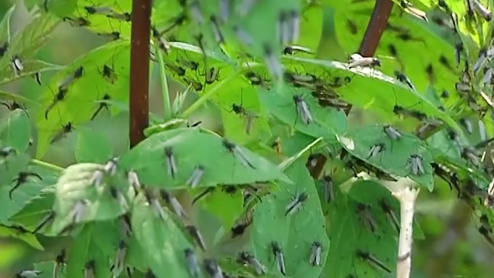 Нашествию комаров