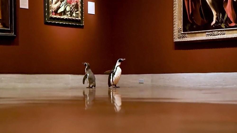 Пингвины в музее