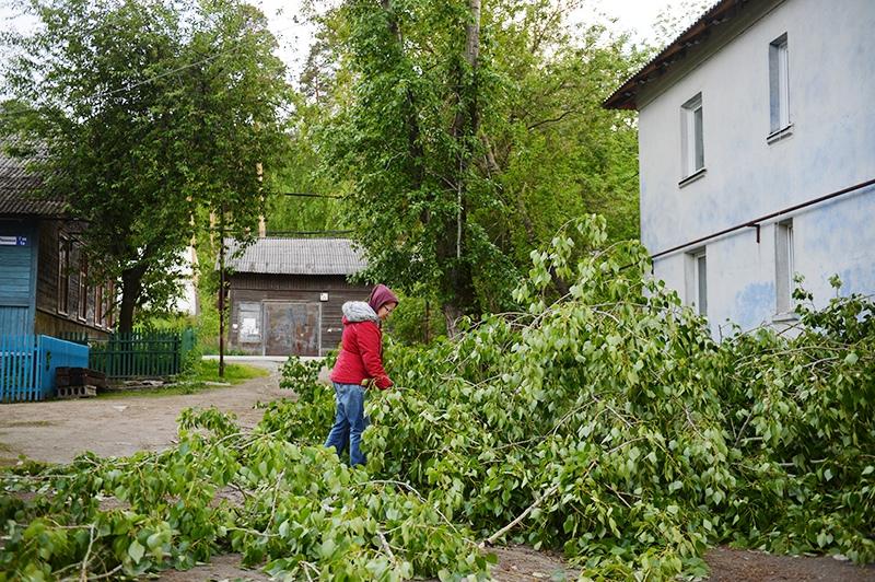 Поваленное дерево после ураганного ветра