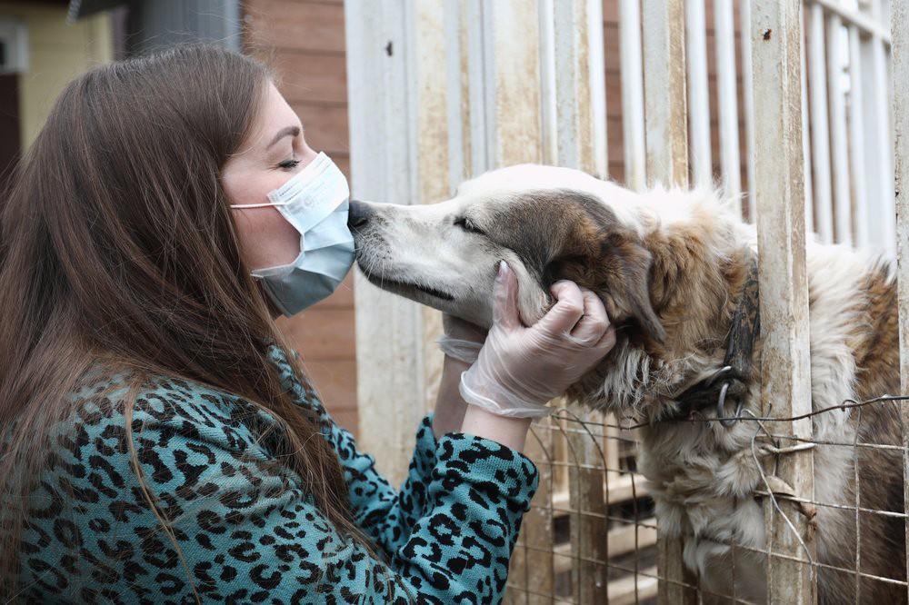 Волонтеры в приюте для бездомных животных
