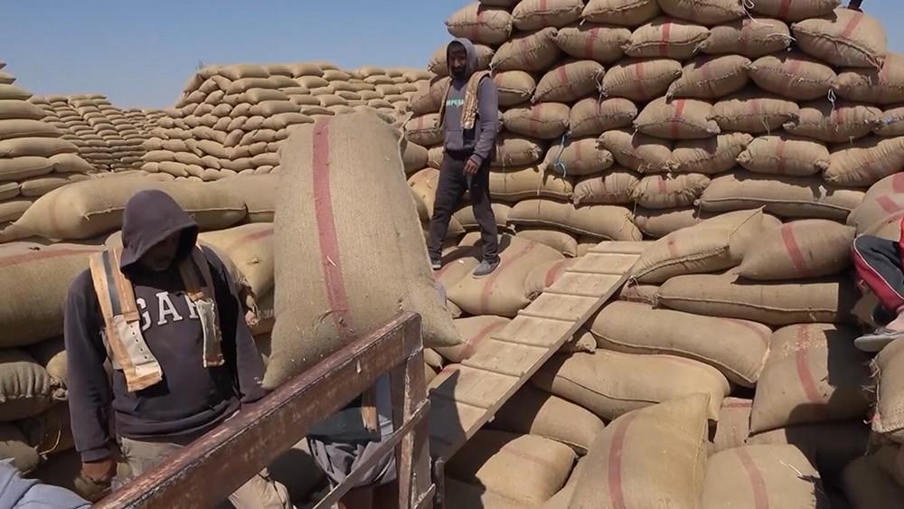 Производство зерновых в Сирии