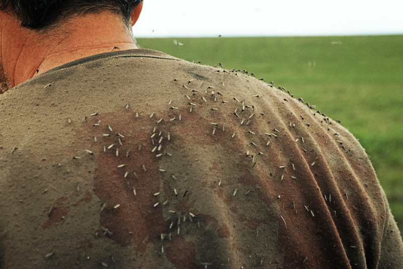 Комары на спине у человека