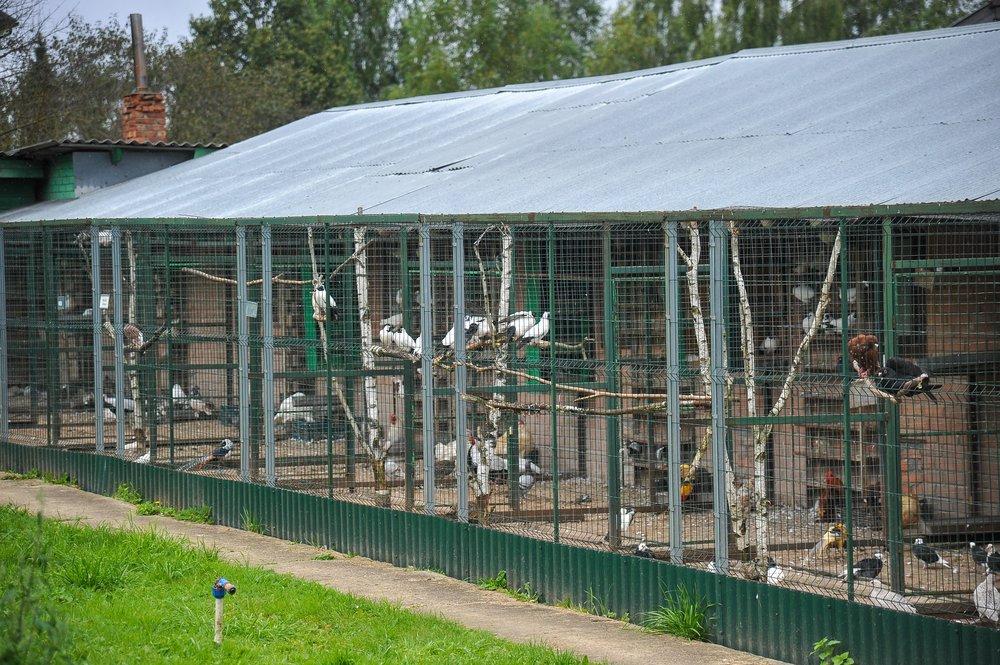 Центр передержки для диких животных