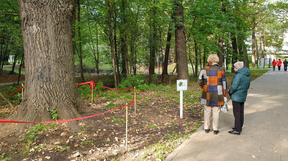 В Грачевском парке в Ховрино растет самый старый дуб в городе, которому 432 года