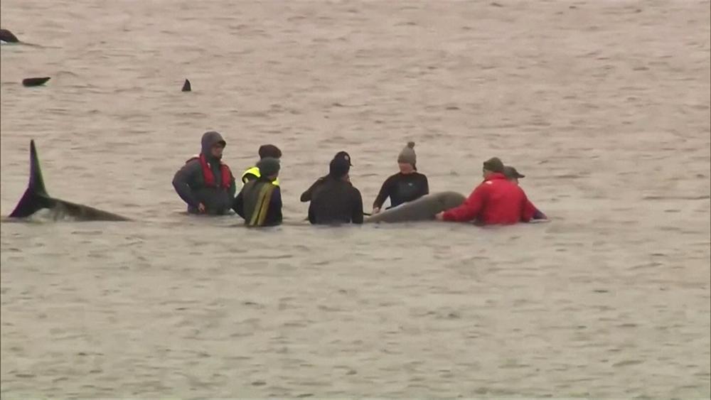 Спасение дельфинов