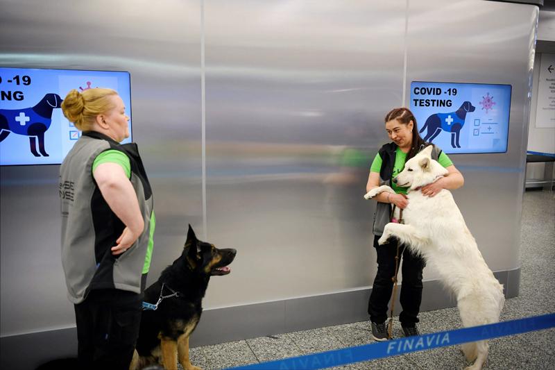 В аэропорту Хельсинки появились служебные собаки по обнаружению инфицированных COVID-19
