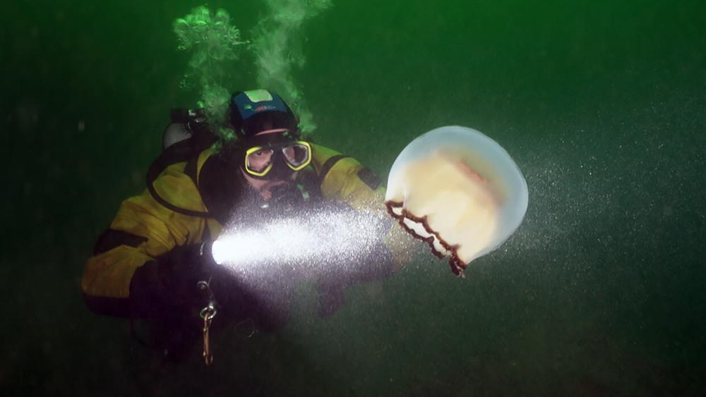 Дайвер и медуза
