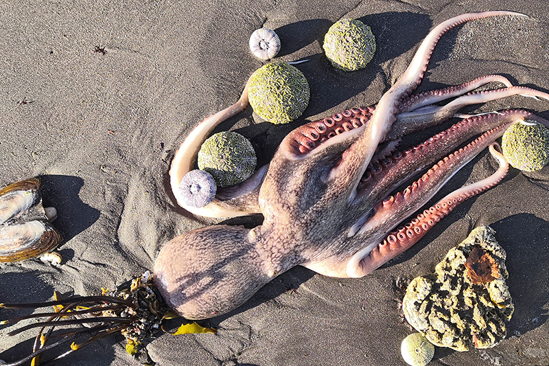 Массовый выброс морских животных на побережье Камчатки