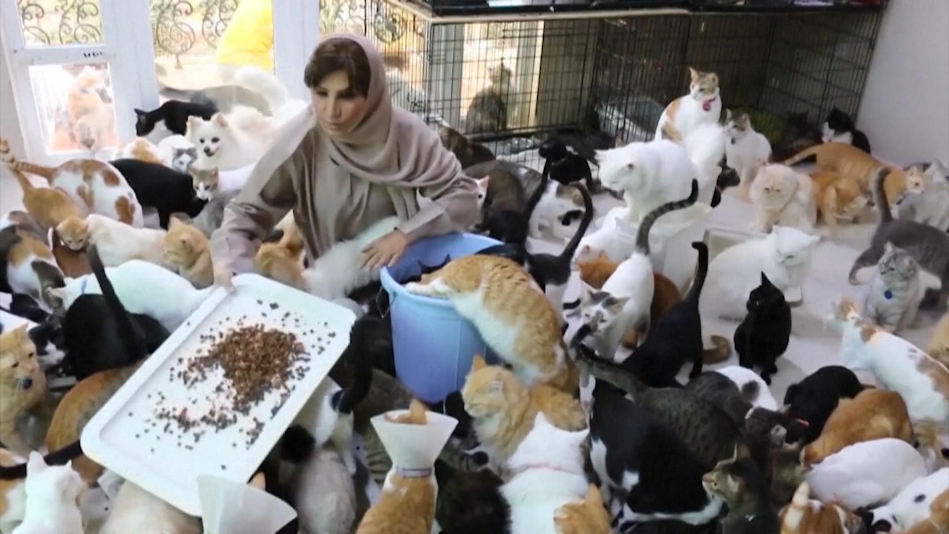 Мариам аль-Балуши держит дома 480 кошек и 12 собак