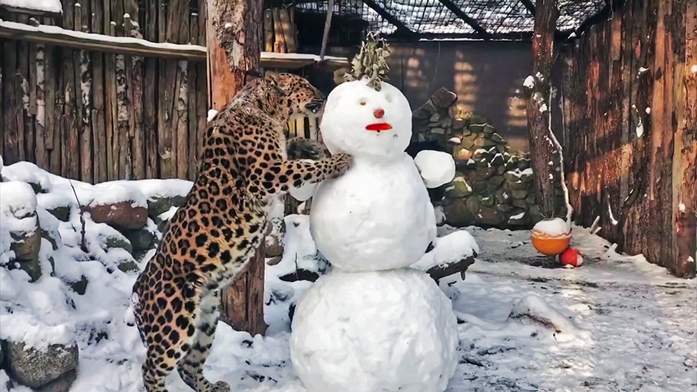 Леопард и снеговик
