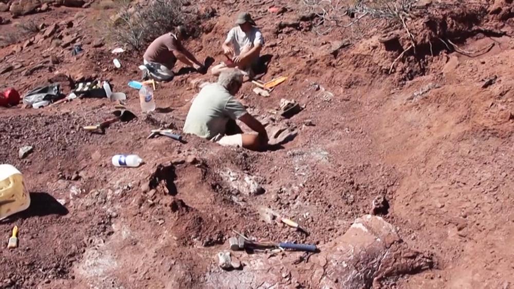 Палеонтологические раскопки