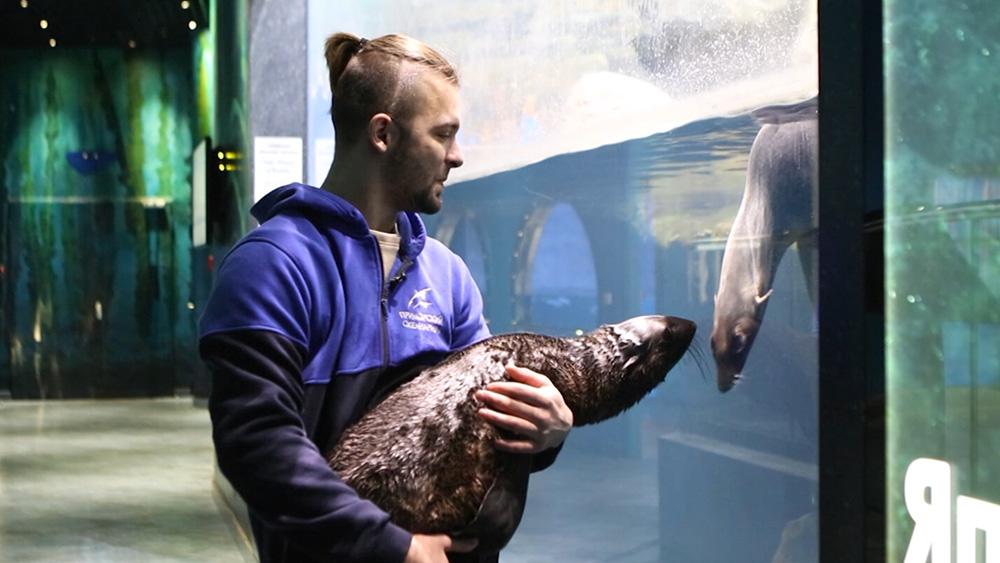 Морской котик в океанариуме