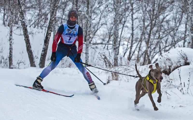 Участник гонки на собачьих упряжках