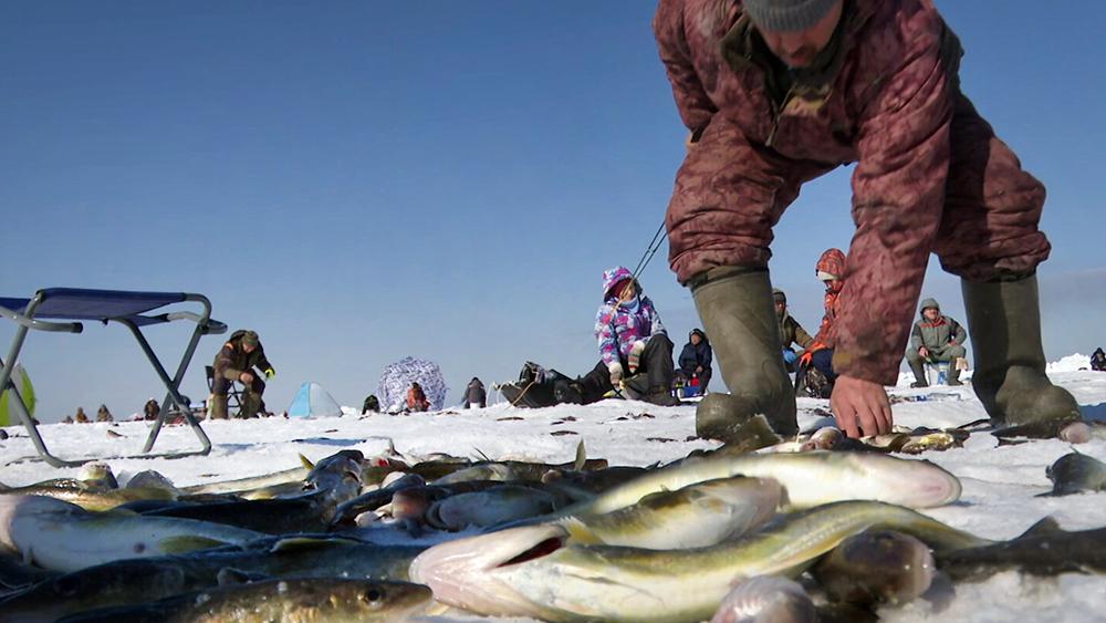 Рыбаки выбрасывают рыбу